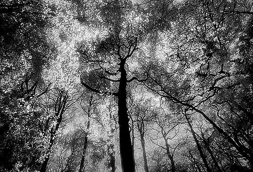 Forest Fantasy-Infra-Red